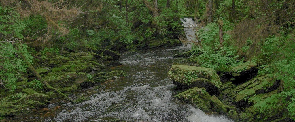 Trees and a river in the Tongass National Forest, Alaska