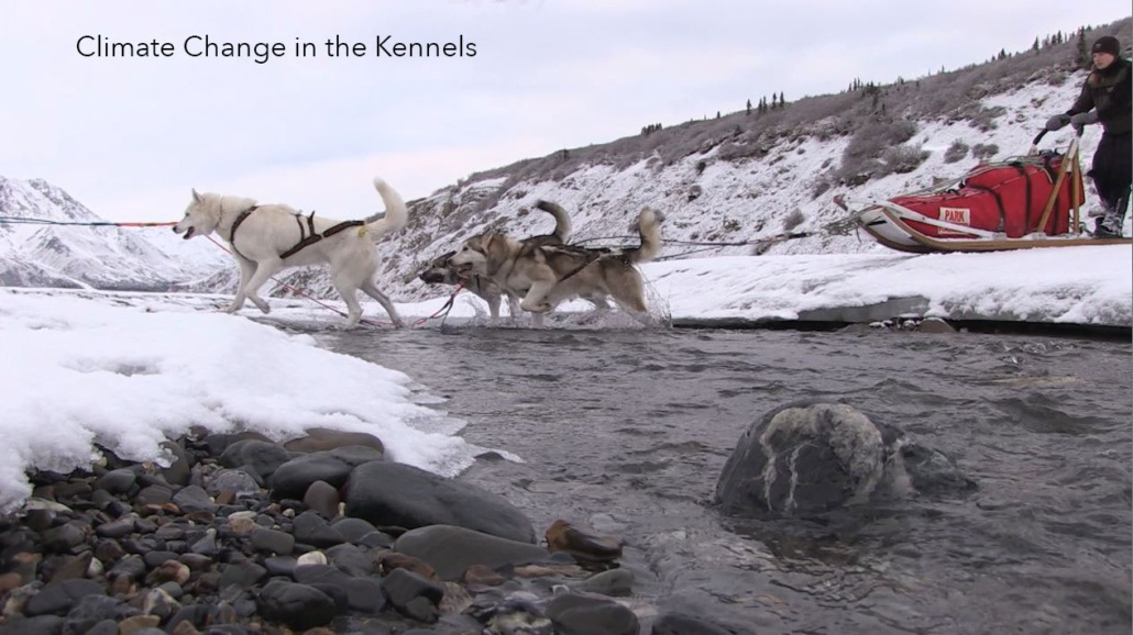 dogs pull a sled through denali national park