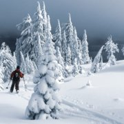 a backcountry skier hikes along a track in a snow-covered mountain in the plumas national forest